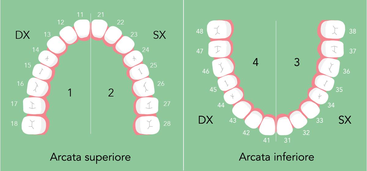la numerazione dei denti