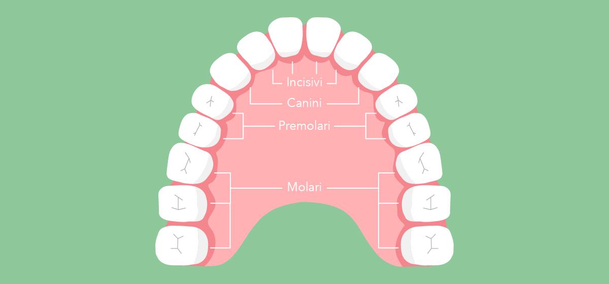 Il nome dei denti